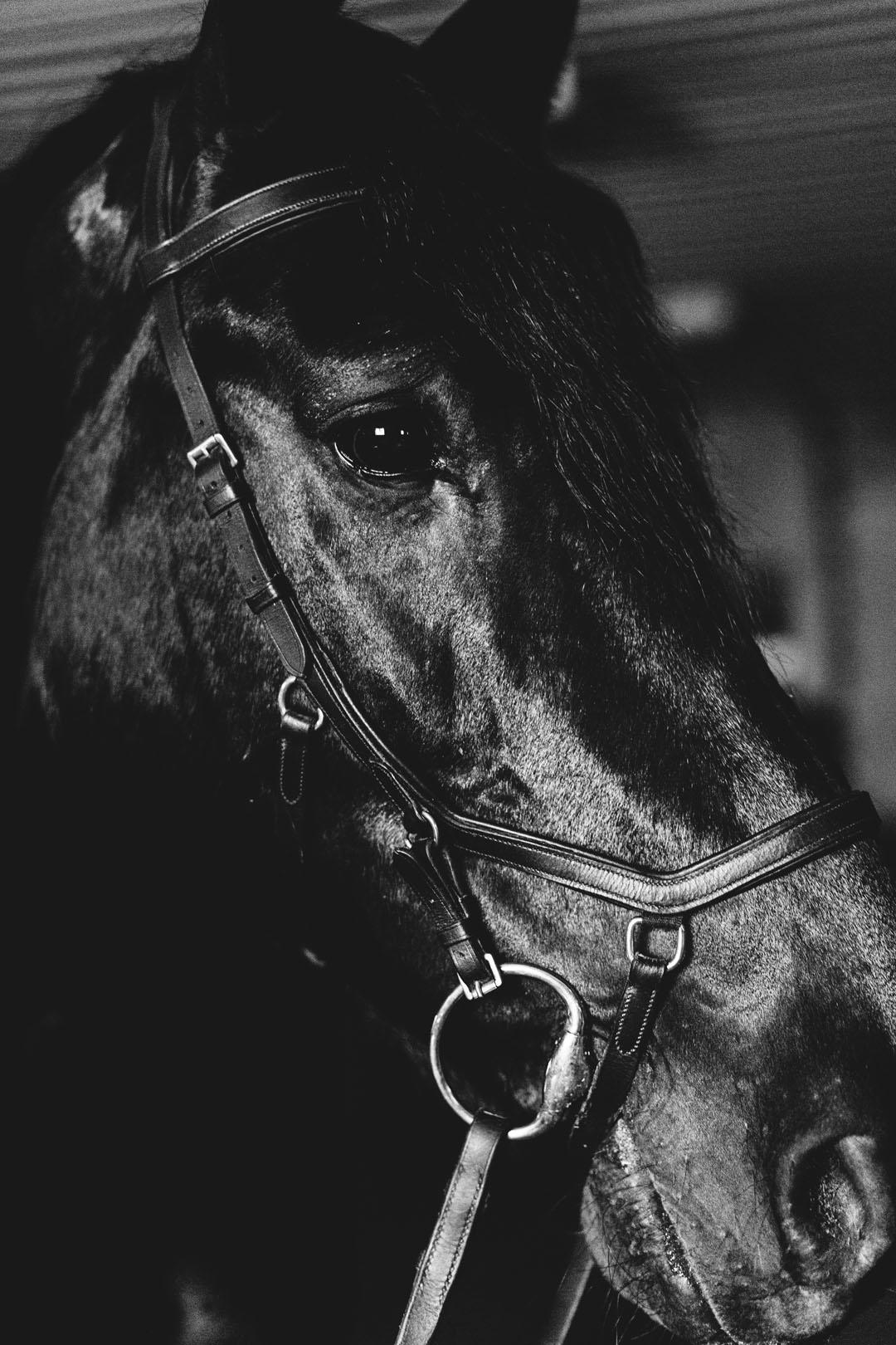 EquestianShoot_BW_HR_-19