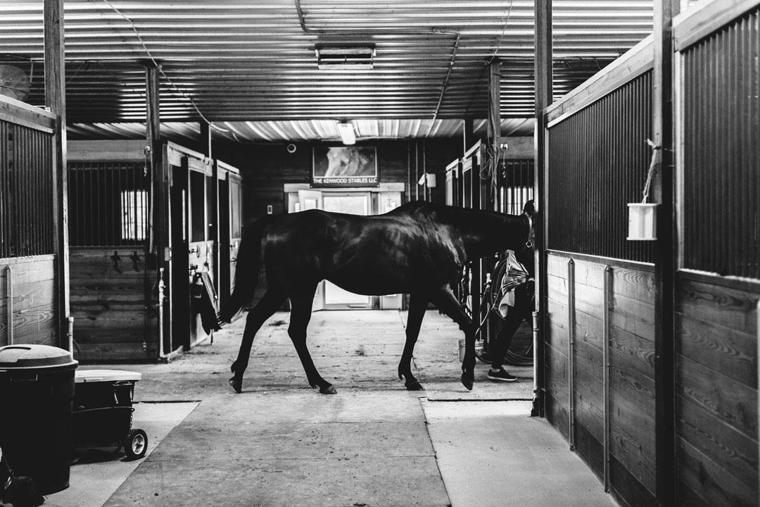 EquestianShoot_BW_HR_-38